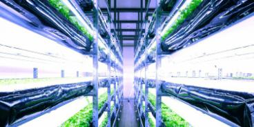 水耕栽培事業の画像